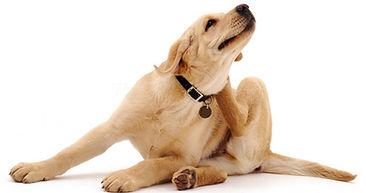 itch dog.jpg