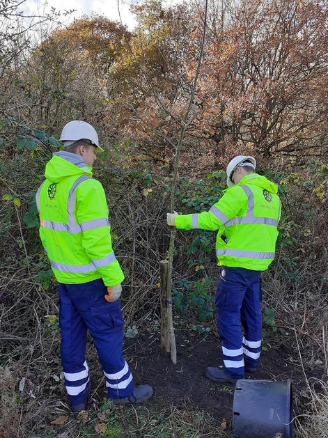Tree Planting with Urban Green Newcastle