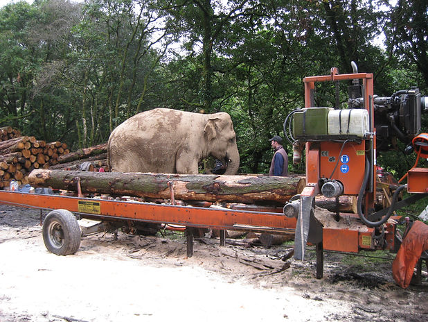 wood - mizer