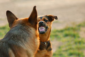 Understanding Dog Aggression – and How You Can Help Your Pup Cope