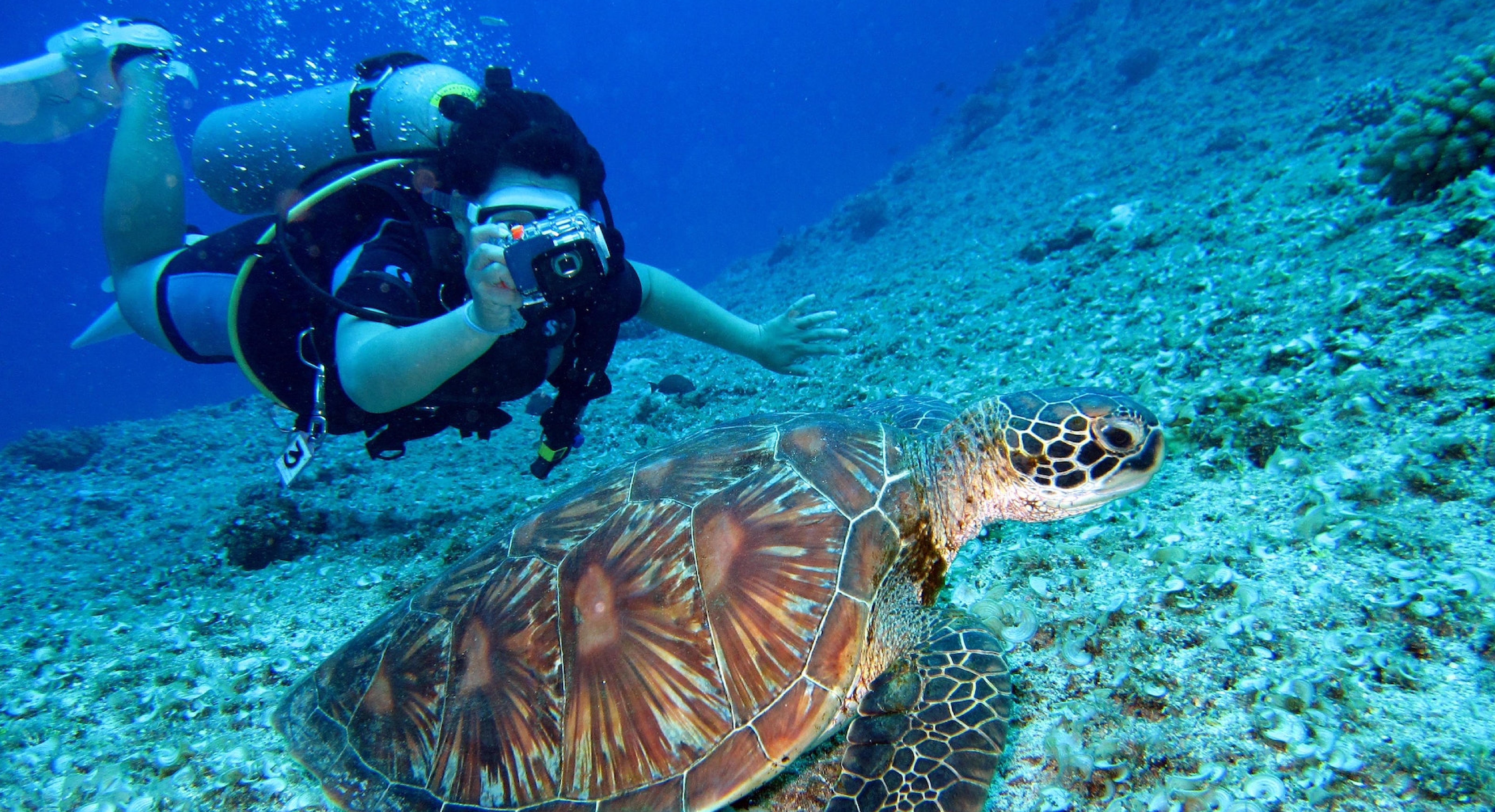 Aventuras Bajo el Mar