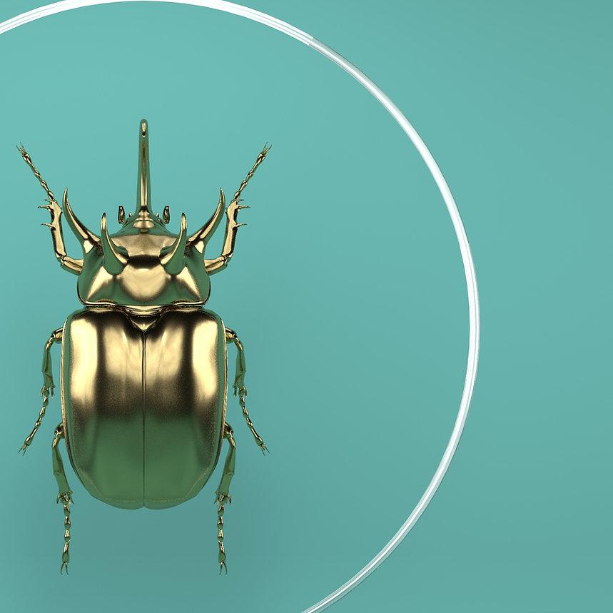 Eupatorus_gracilicornis0000.jpg