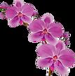 flower-flowering-plant-petal-moth-orchid