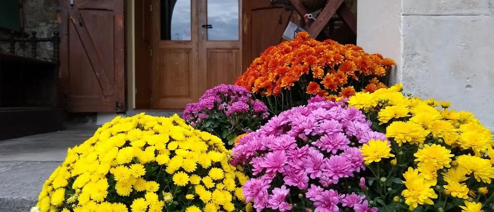door and flowers.jpg