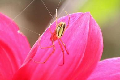 Spider in flower