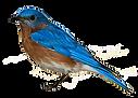 favpng_eastern-bluebird-sparrow-clip-art
