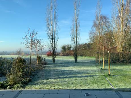 Poplars framing view to pool in field