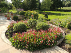 Persicaria affinis Darjeeling Red makes great front of border impact
