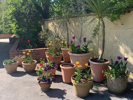 A collection of pots enhance a corner of the driveway