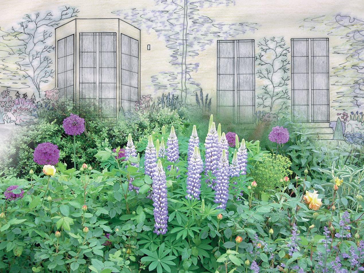 Sketch and garden image.jpg