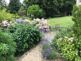 Rosa Ballerina and lavender by one of the seating areas