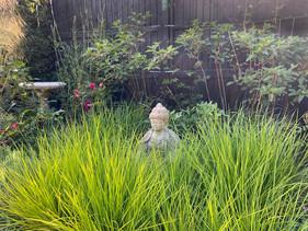 Buddha nestled among Sesleria Greenlea