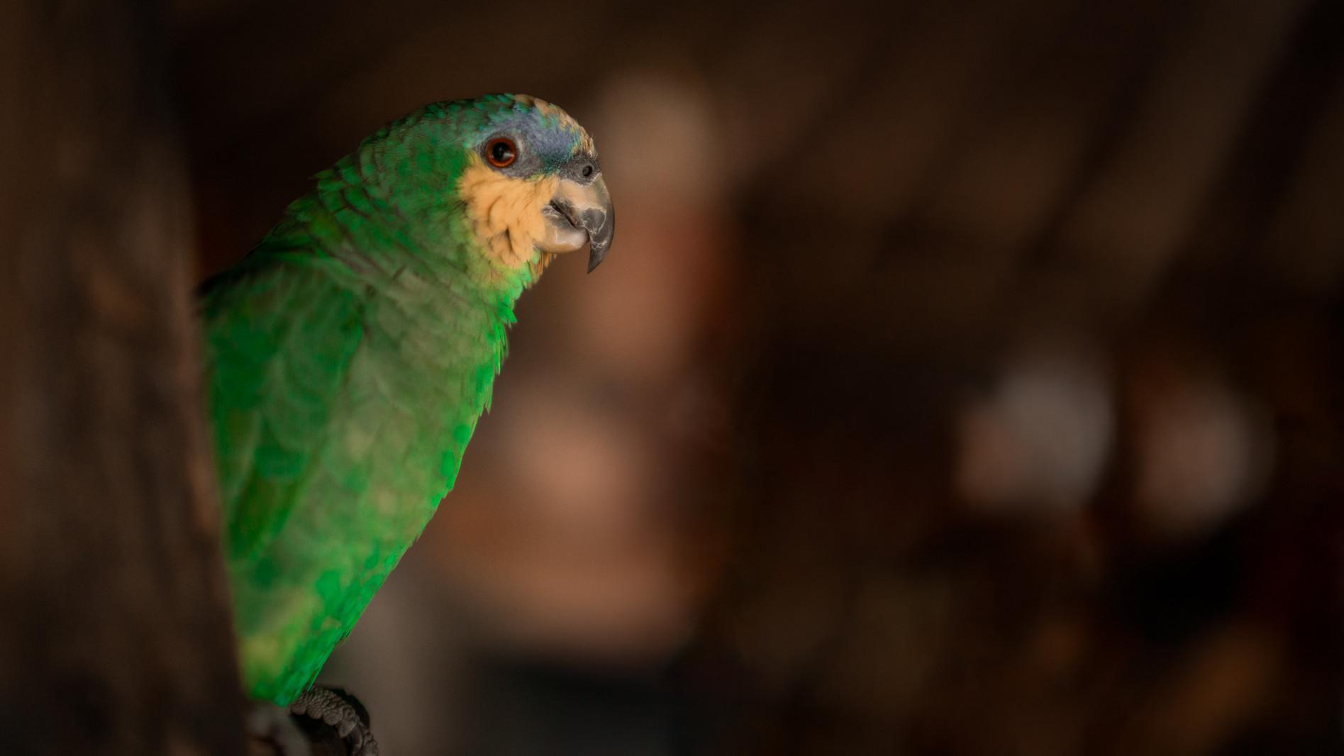 Mara e Bruno Wix Retouched Reserva Papag