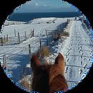 smallhorse4.png