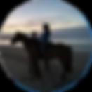 smallhorse2.png