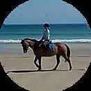 smallhorse.png