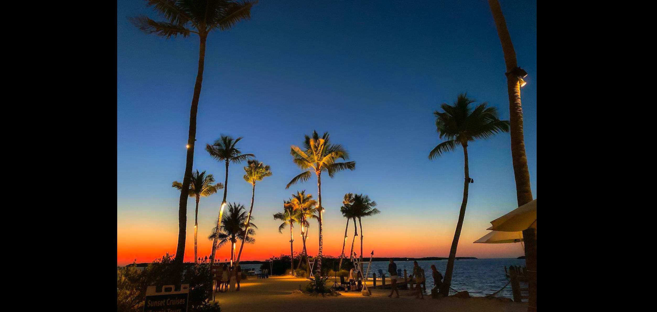 Night Palms The Keys