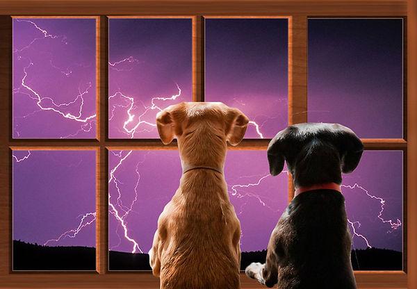 2 dogs thunderstorm Mother Earth.jpg