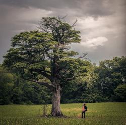 Eternity's Tree Album Cover