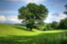 tree-402953_1920.jpg
