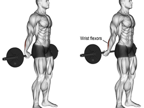 Building Forearms