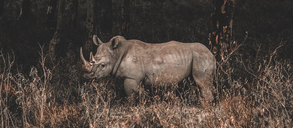 The stunning wildlife of the Masai Mara