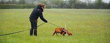 canine_tracking.jpg