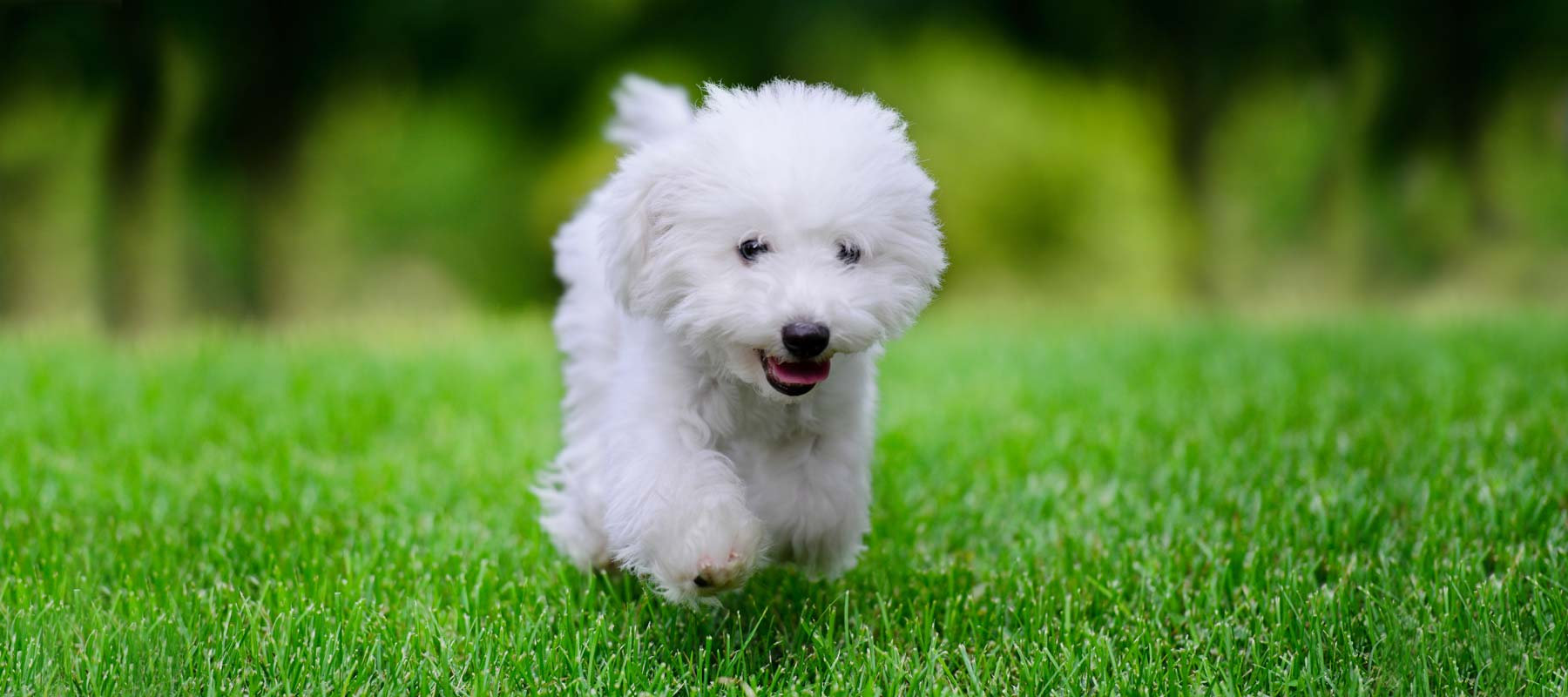 Puppy 1 : 1  Training Package Bronze