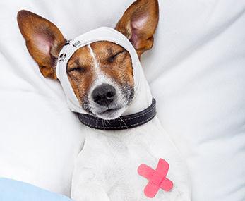 Puppy Training Doctor Helpline