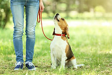 puppy-lead-sitting.jpg