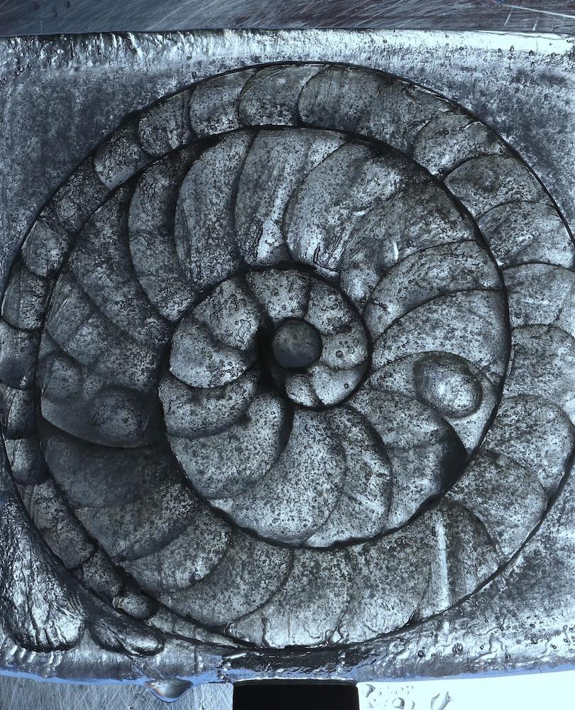 Diatom by dusk.jpg
