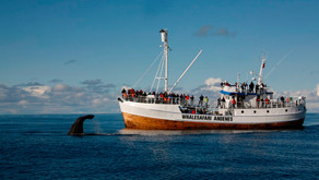 A Guide To Whale Watching In Norway