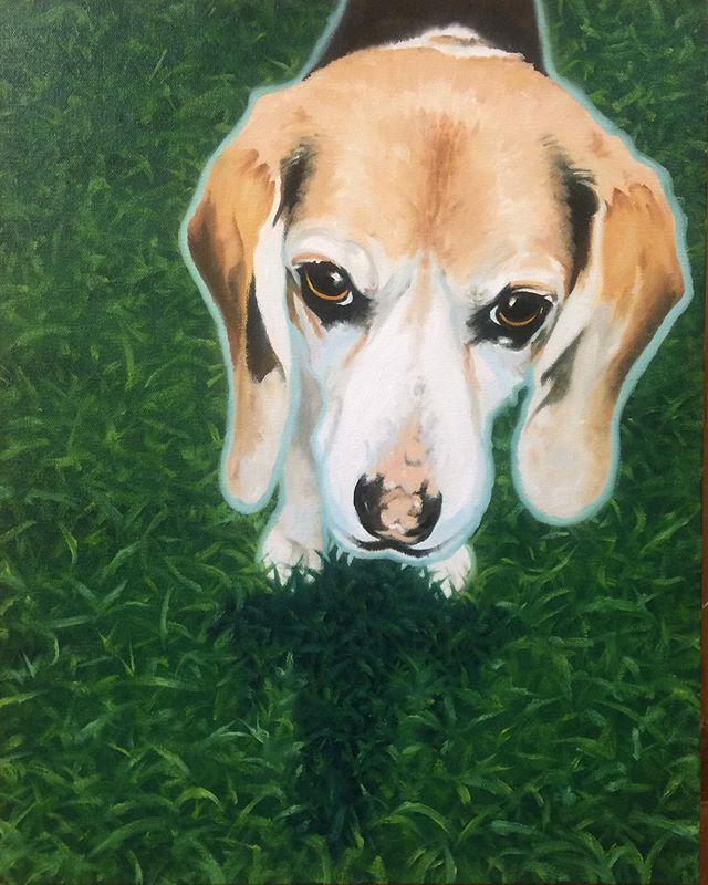 Peanut the Beagle