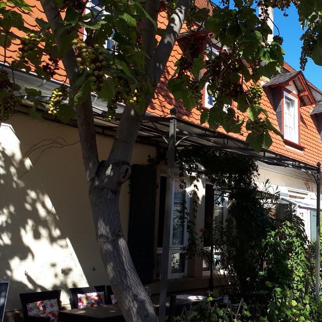Terrassenplätze zwischen Oleandern und Blauglockenbaum