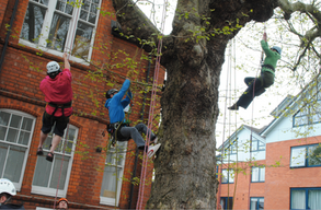 Tree Climbing 2013