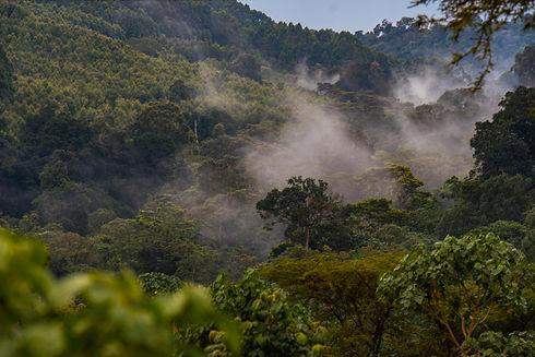 James Finlay Kenya Mau Forest 1.jpg