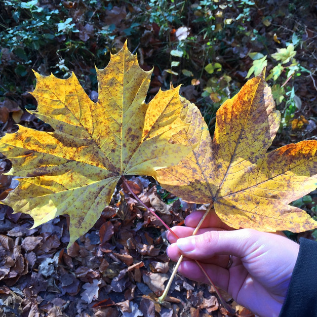 Hier Ein Paar Herbstliche Deko Ideen Für Euch. Raus Gehen, Frische Luft  Schnuppern, Einsammeln Und Los Dekorieren :) Völlig Kostenfrei Und Tut Auch  Noch Der ...