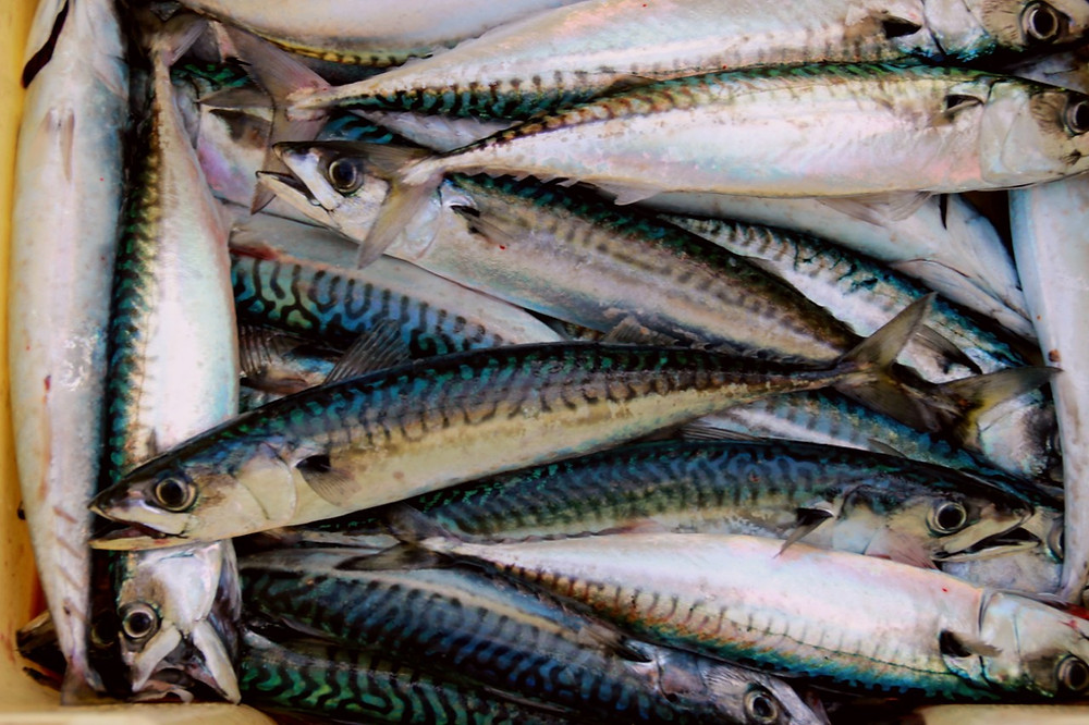 In Season in May; Mackerel