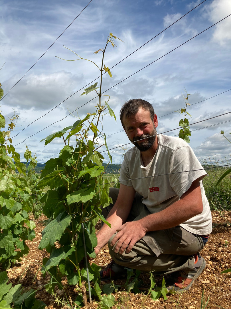 Hervé Fabbro, vigneron