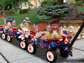 4th of July parade by piggies