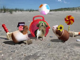 pigs beach S'moresy.jpg