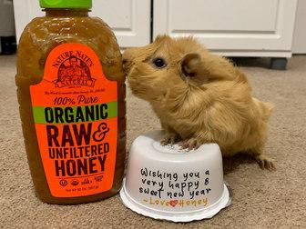 Happy New Year from Honey