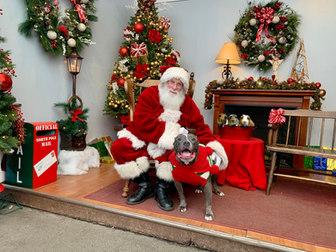 Bitey & Pigs with Santa.jpg
