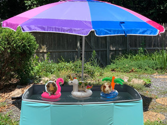 Pool S'moresy.jpg