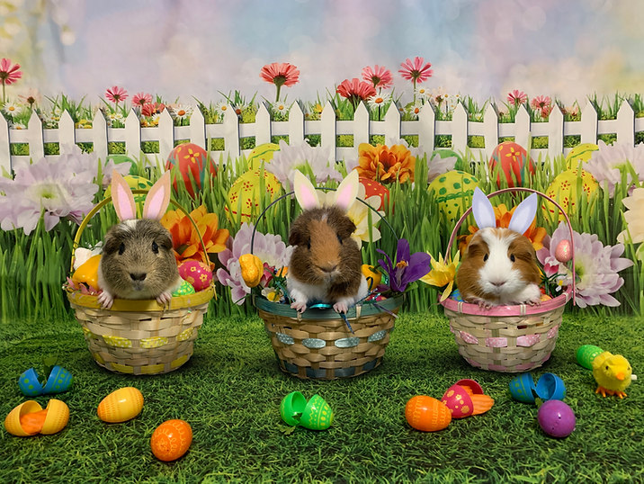 Easter by piggies
