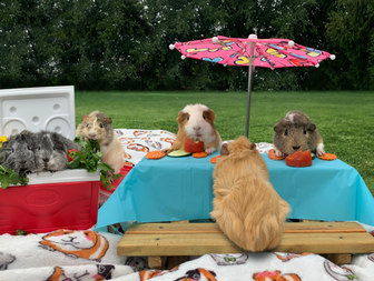 piggie picnic.JPG