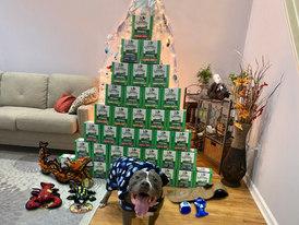 Bitey & his greenie Christmas Tree!