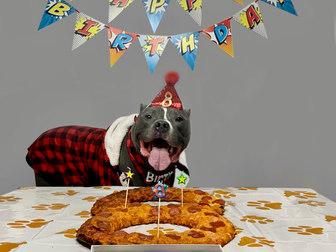 Bitey 8th Birthday.jpg