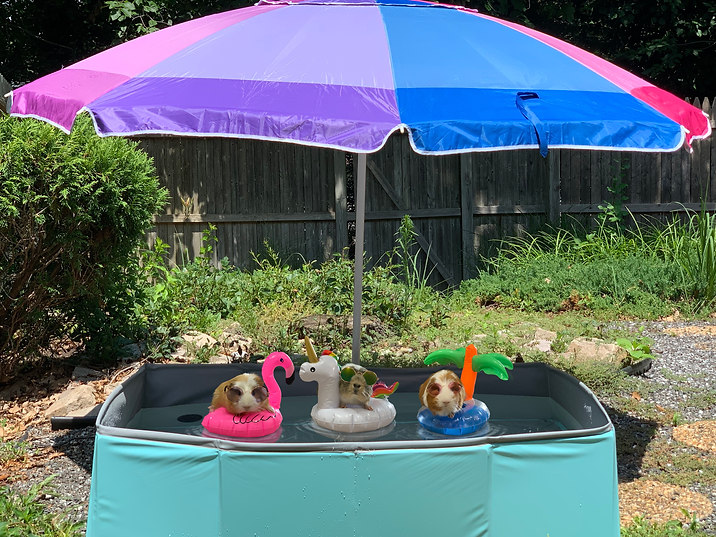 Coolin' off by piggies