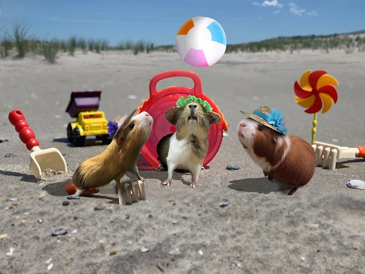 Beach day by piggies